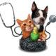 honden verzekering