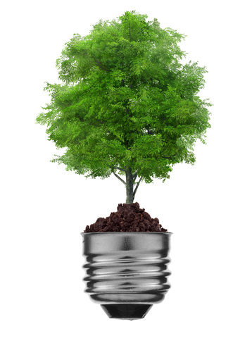 energiebomen